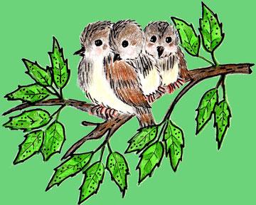 Die Spatzenschwestern sitzen auf einem Zweig (Buntstiftzeichnung)