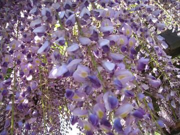 植物が一番美しい季節ですね。
