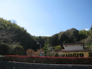 2月20日。良いお天気でした。セナ、ありがとう。
