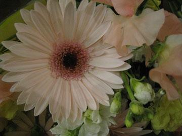 ガーベラピンクはセナの花?