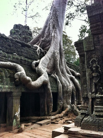 #KambodschaLive Ta Phrom
