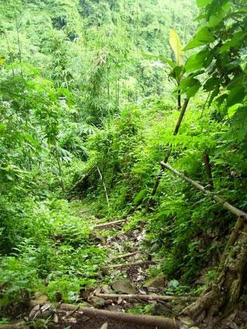 Eine mit Bambusstreben befestigte einfache treppe hinunter in ein Flusstal