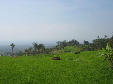 view from ricefields to the shore