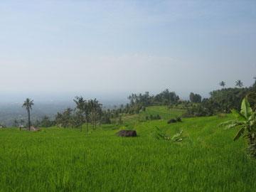Im Vordergrund Reisfelder, im Hintergrund die Nordküste Balis