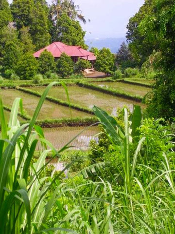 Strukturierte Reisterassen mit Blich auf Balis Nordküste