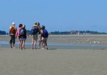 traversée, baie de Somme, sortie nature, randonnée, guide, spécialiste, oiseaux, plantes, Le Crotoy, Saint Valery sur Somme