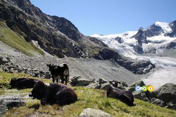 Wandern am Glacier du Moiry