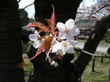 20100322  京都府立植物園