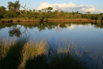 aufgenommen  im Mkhaya Private Game Reserve in Swaziland