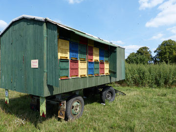 Großer Bienenwagen der Imkerei Ökohof Fläming von Familie Rosenthal.