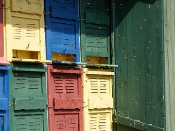 Die Honigbienen fliegen stark ein und aus vor den Fluglöchern der Bienenstöcke (auch Beuten genannt). Die bunten Fluglöcher helfen ihnen bei der Orientierung. Hier am Bienenwagen. Trotz Sonnenschein war der Ertrag sehr gering.