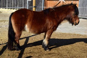 Pony Funny