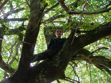 Antonin dans le Vieux Chêne