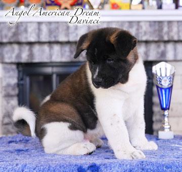 #bestdog #akitakharkov #akitakharkiv #akitaharkiv #americanakitaukraine #akitaukraine #americanakitainukraine #bestpuppiesakita #puppiesakitaforsale #bloodchampions #puppyfromchampions #akitakennels #kennelkharkiv #breederukraine #bestbreeder