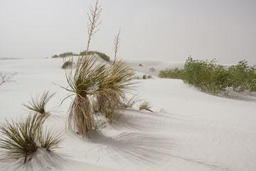 Foto White Sands