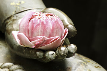 Bild: Lotusblüte, Buddha, Hand