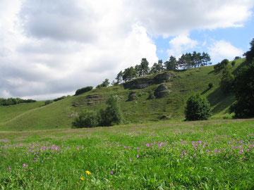Tal der Wissinger Laber – NATURA 2000-Gebiet. Foto: Landschaftspflegeverband Neumarkt