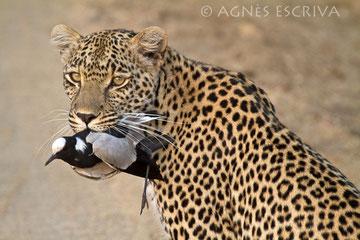Karula et l'oiseau
