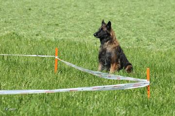 In der Longiergruppe der Hundeschule Matte werden die Bindung zum Menschen, die Kontrolle auf Distanz trainiert. Longieren bedeutet nicht monotones im Kreis laufen, sondern verlangt eine hohe Konzentr