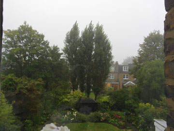 まるで、森のような裏庭。庭の向こうに見えるのが、隣の通りのお家の裏庭。裏庭どおしがくっついているのです。