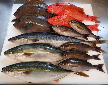 宅配寿司 天然地魚