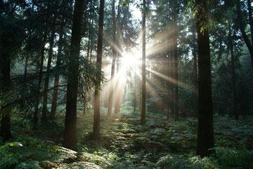 Der Wald schläft noch, die Sonne ist schon aufgestanden!