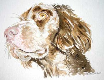 Portrait d'un chien fidèle