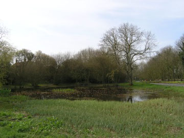 The Village Pond, East Dean.