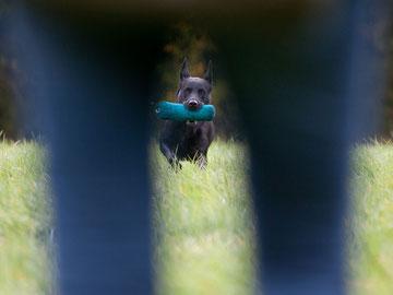 (c) Hundefotografie Petra Spoerle-Strohmenger