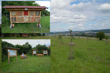 "Streuobstwiese Johannesberg mit Insektenhotel ""Villa Summ-Summ"", Infotafel und Ruhebänke"