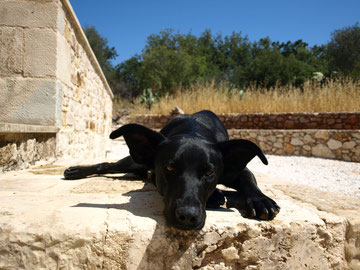 Fibi - chien thérapeutique/ VetMed Universite de Vienne