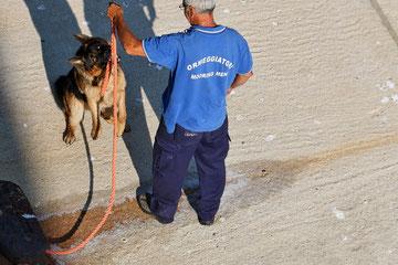 Der Leinenhund von Bari in Aktion