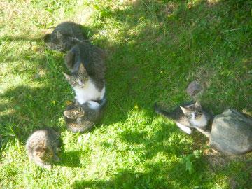 Luisenauer Katzenkinder