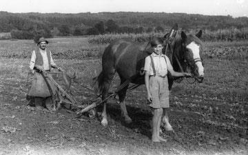 Wachmanns einst am Feld (1953)