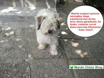 FOTOS ANIMALES