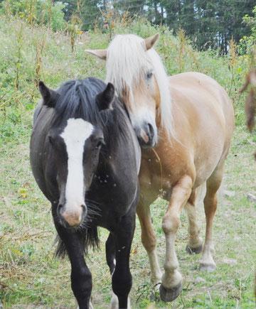 Juen mit seiner Mama Sommer 2010