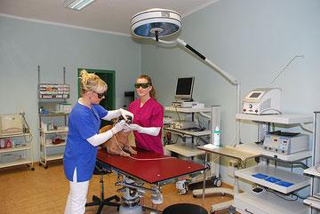 Laserchirurgie - Tierarztpraxis Rafael
