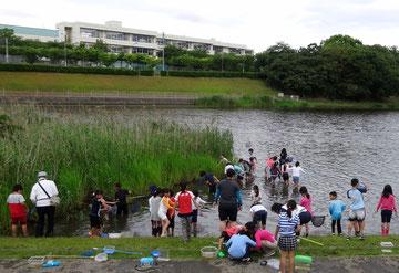 池に入ってメダカなどを採取(池の向こう側が千鳥小校舎)