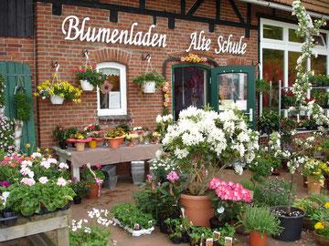 Blumenladen, Alte, Schule, Bokel