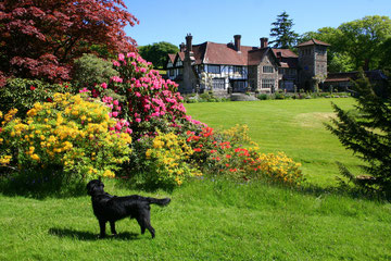 Coombe Trenchard in Devon is very dog-friendly.