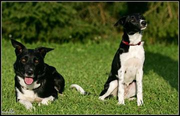 Raider & Millie