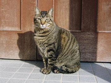 オッサン猫で悪かったな。