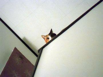 猫は高い所が好き。