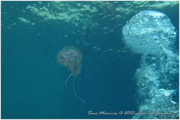 méduse bulles
