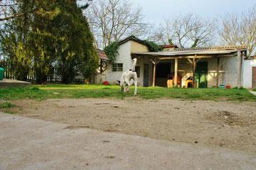 Tierheim Ungarn