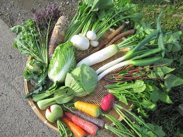 12月の野菜