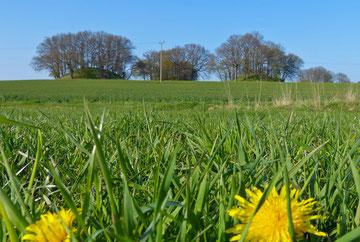 Woorker Berge, Hügelgräber nahe Ralswiek