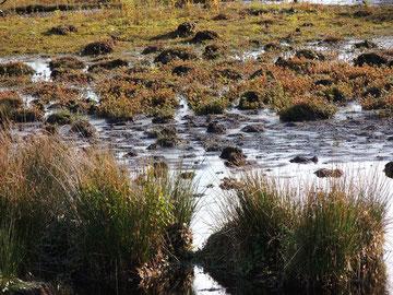 Sumpf und Heide