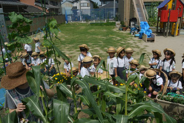 トウモロコシがたくさん採れました。