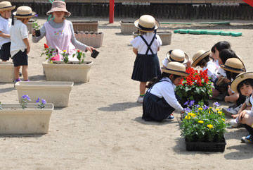 好きな花を選んで植え付けます。